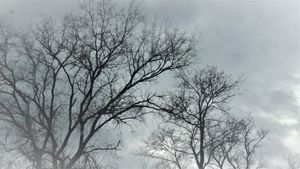 Cloudy day tree line