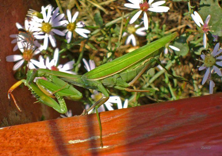 Pretty Mantis - ZuminStudios