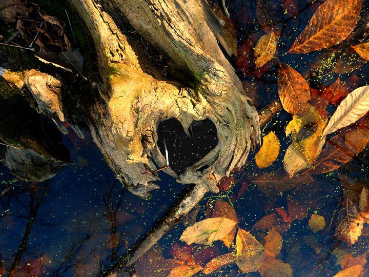 bark endearment vibrance - Nuclear Jupiter Photography