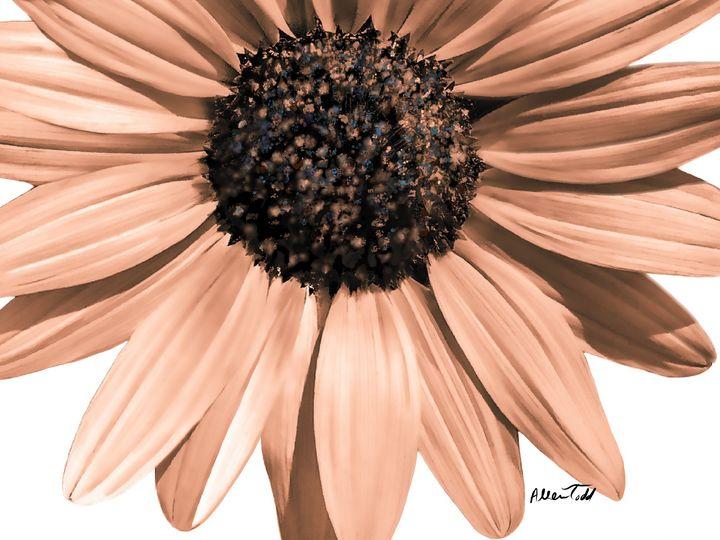 Oh Beautiful Flower - Allen Todd