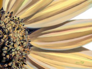 Morning light- Sunflower series 2 - Allen Todd