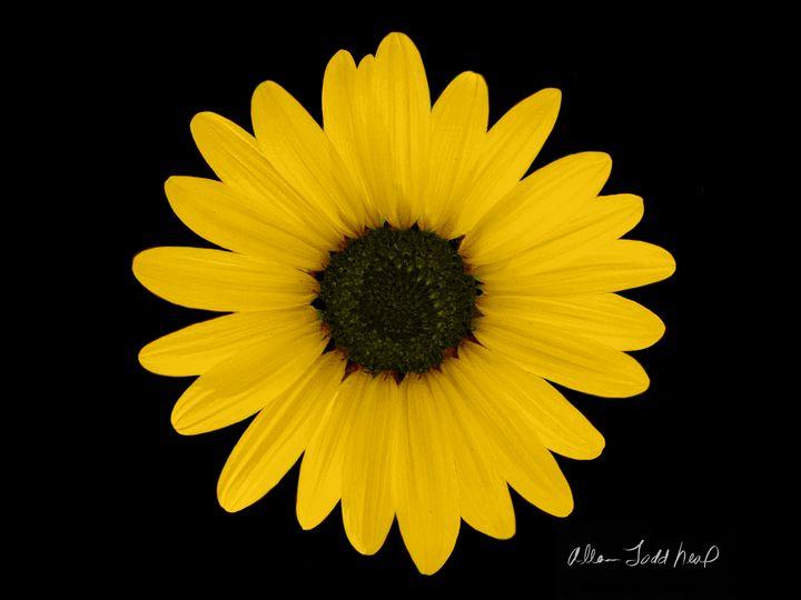 Sunflower Portrait - Allen Todd