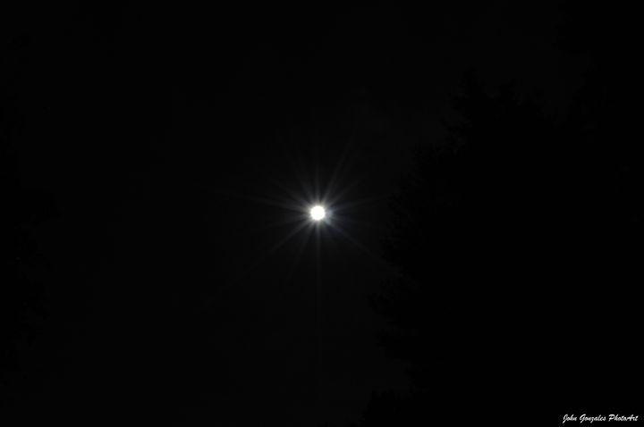 Moon Light Trees - John Gonzales PhotoArt