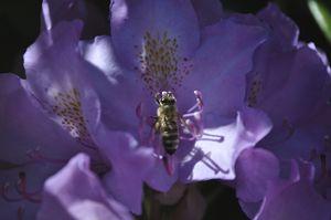 Bee Pollen Paradise