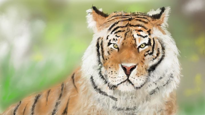 Bengal Tiger - First gallery