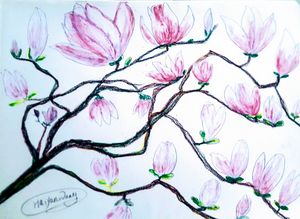 《Pink magnolia flower》