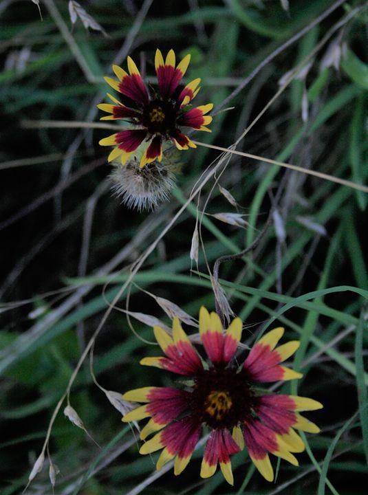 Wild Flowers - Leeora's Photography
