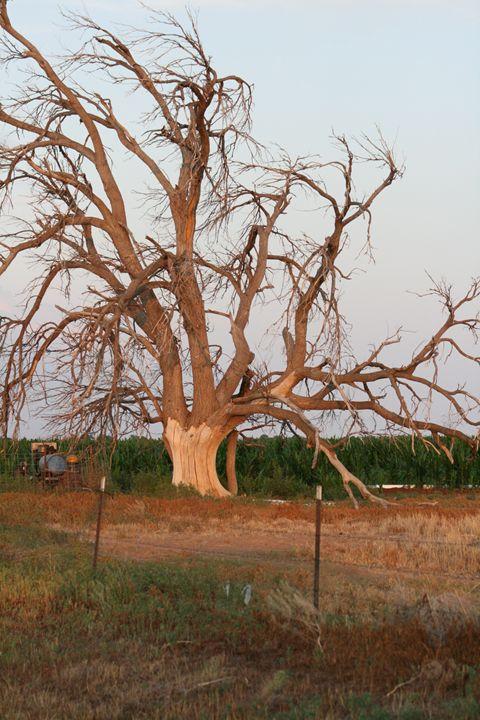 The Wilting Tree - Leeora's Photography
