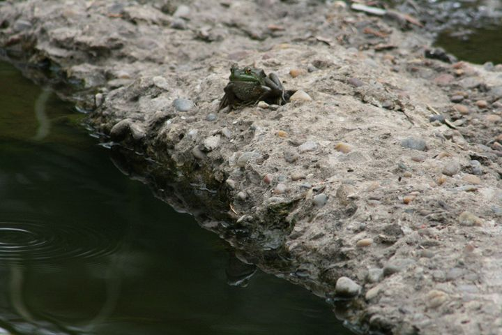 Frog and Reflection - Leeora's Photography