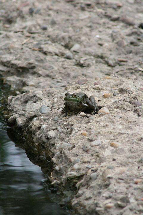 Frog - Leeora's Photography