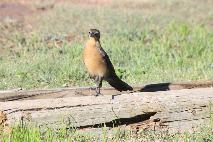 Bird Walking - Leeora's Photography