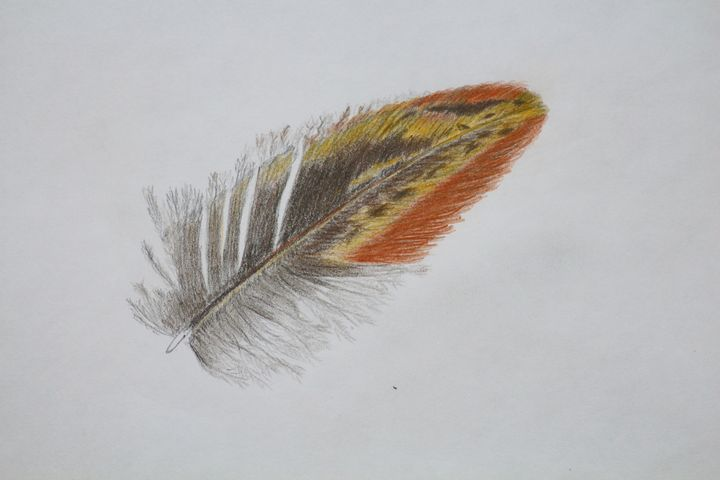 Feather - Nature Art Gallery