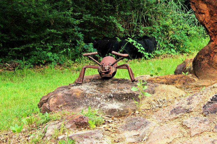 Metal Insects - Shelly Boren Photography