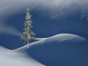 Snow Covered Tree and Mountains C
