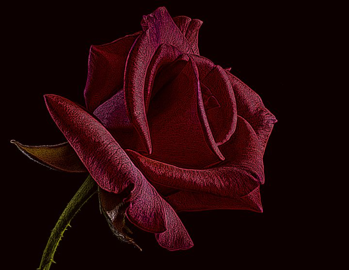 Single Red Rose of Love - David Dehner
