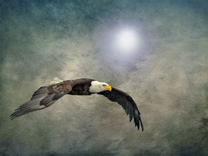 Bald Eagle Textured Art