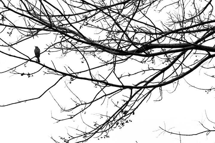 The Bird - Terry Kraemer