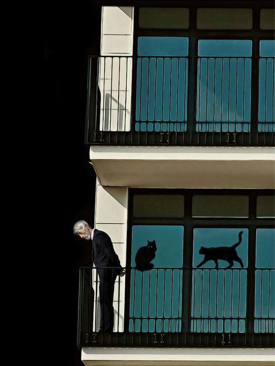 OLD MAN AND HIS CATS - Mr STRANGE (JM GITARD)