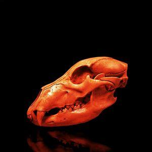 Disco bear skull - Mr STRANGE (JM GITARD)