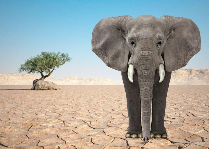 THE WISE ELEPHANT - Mr STRANGE (JM GITARD)