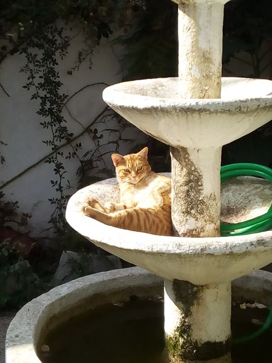 My cat - Cana tome