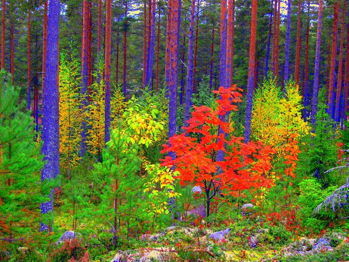 Fall colors - paulihyvonen