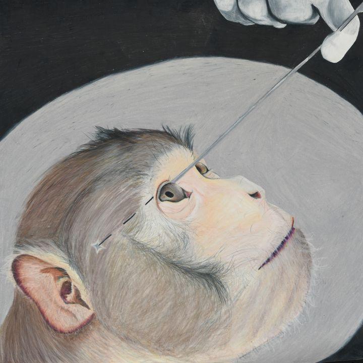 Animal Testing - Maria Truong