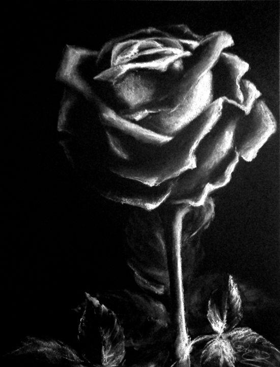 black rose, pastel, A4 - rogerioarte