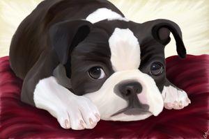 Cute Boston Terrier - Hunart Pixels