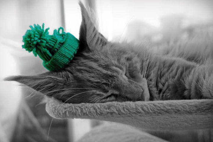 Sleeping Maine Coon christmas hat - Hunart Pixels
