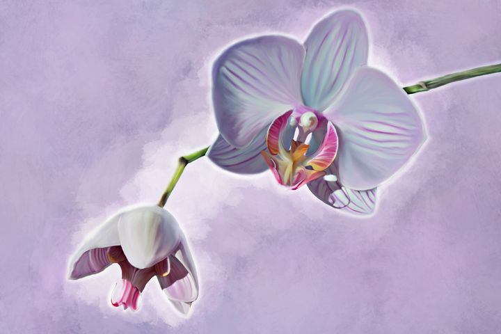 Pink Orchid Digitally Handpainted - Hunart Pixels