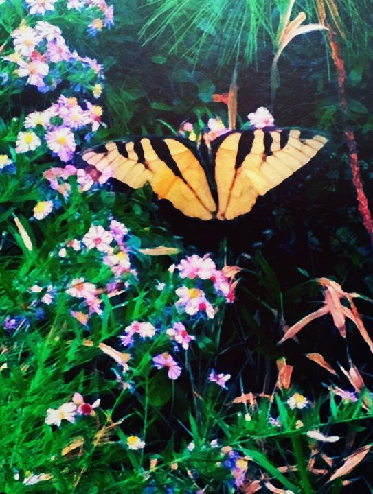 My Elusive Butterfly - T. Elizabeth Originals