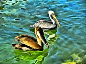 Mismaloya Pelicans