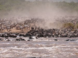 The Great Masai Mara Migration