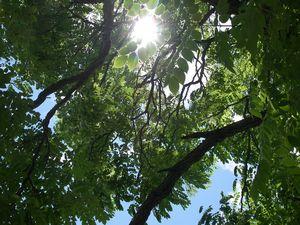 Vert Trees