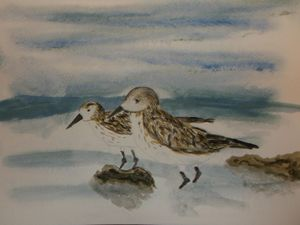 A pair of Sandpipers
