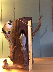 Chickadee Nest#2