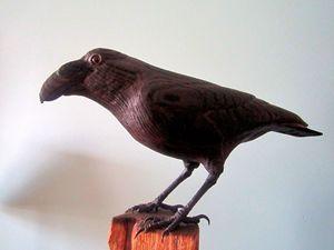 """Corvus"" Crow"