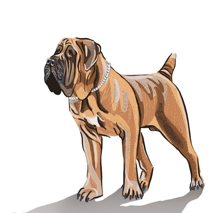 Bulldog - Esther Francis Artworks