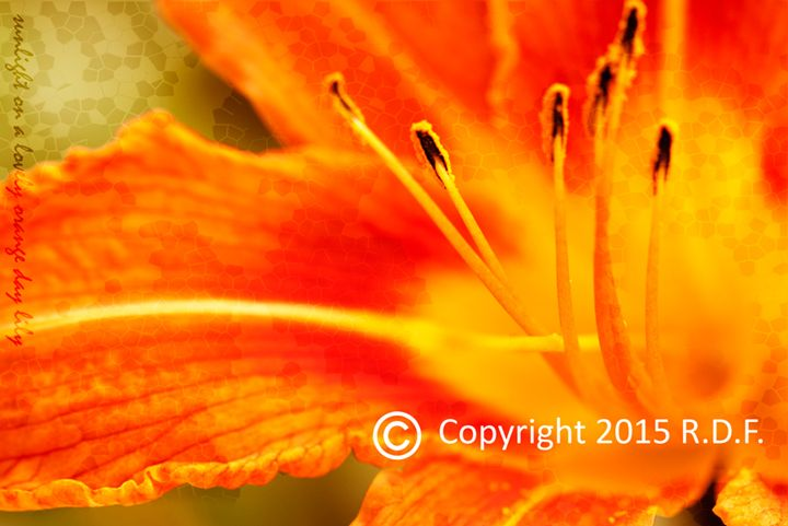 Floral 9 - RAY Gallery Photography