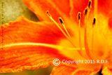 Fine Art Flower Photograph