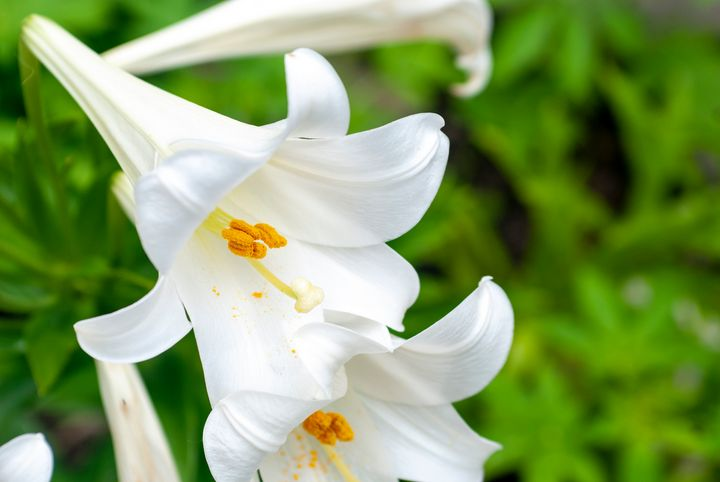 Easter Lilies - Persinger Creations
