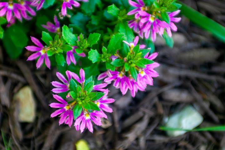 Purple Petals - Persinger Creations
