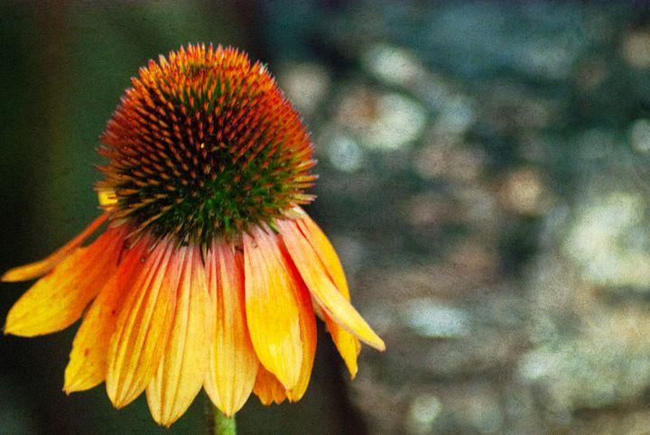 Autumn Coneflower - Persinger Creations