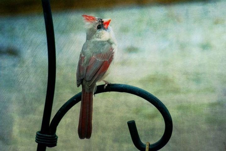 Female Northern Cardinal 2 - Persinger Creations