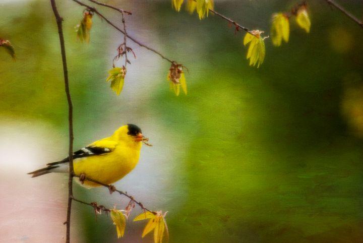 Nest Building Finch - Persinger Creations