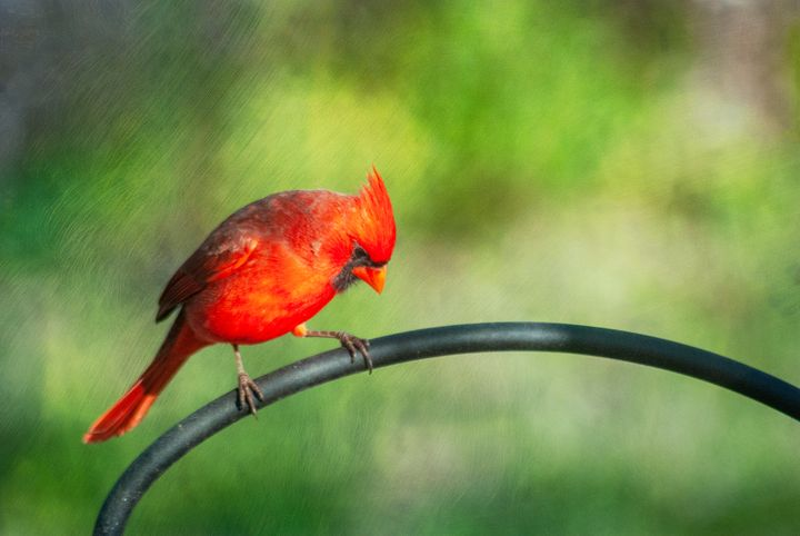 The Cardinal Rule - Persinger Creations