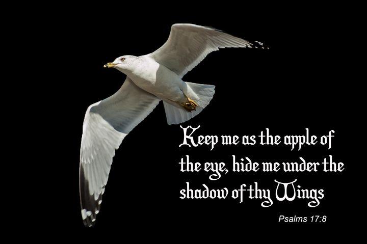 Psalms 17:8 - Persinger Creations