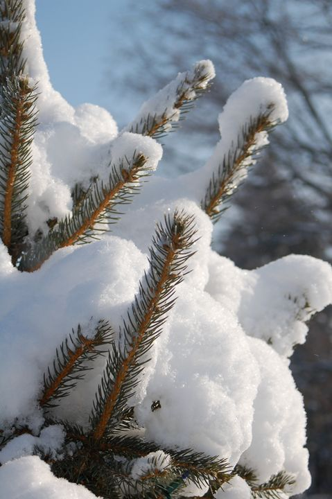 Snow Covered - Persinger Creations