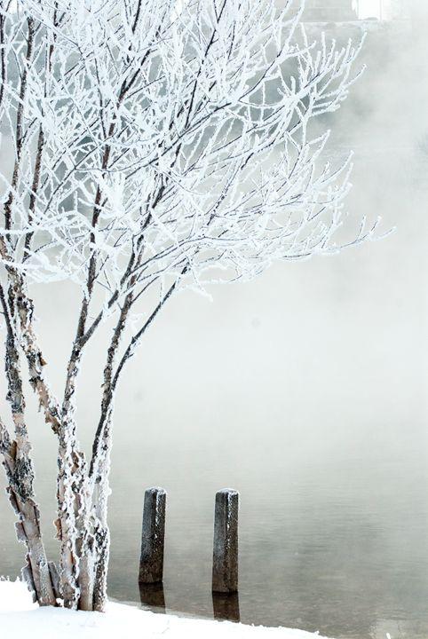 Frozen River Birch - Persinger Creations